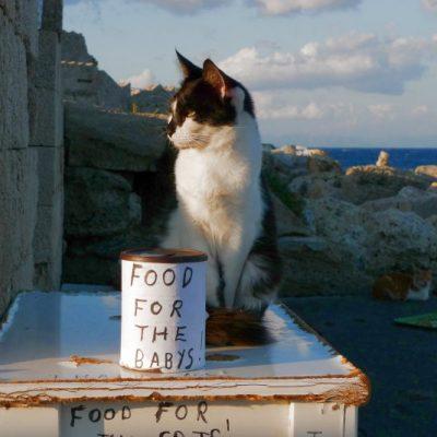 Von Rhodos, Katzen und der Blog-Redaktion