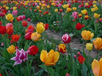 Wochenendgruß: Blumengrüße!